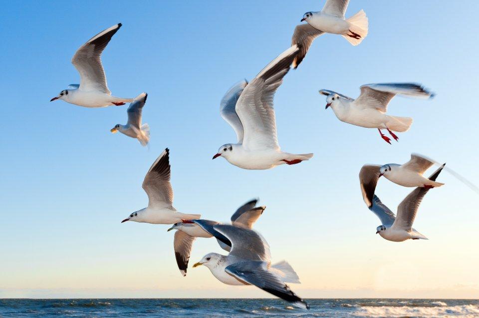 animals-birds-flying-54462