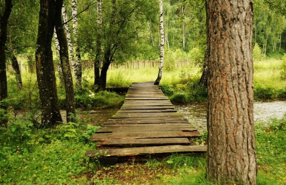 bridge-21031_1280